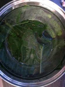 Cucumber Pickles - Ingredients 4
